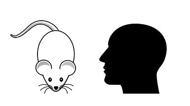 Cathalijn Leenaars vergeleek dierstudies met mensstudies in de opzet van hun onderzoek naar de effectiviteit van methotrexaat