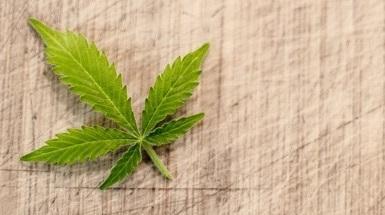 Onderzoek naar bijwerkingen Medicinale Cannabis